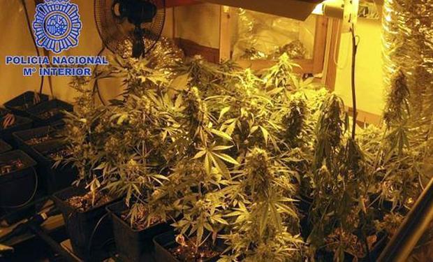 marihuana-getafe