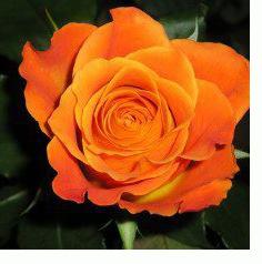 rosa-naranja