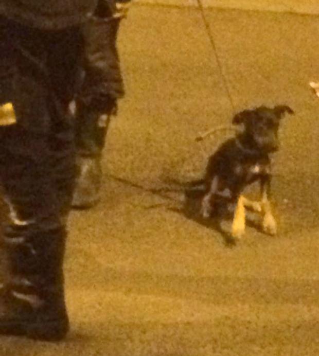 perro-rescatado